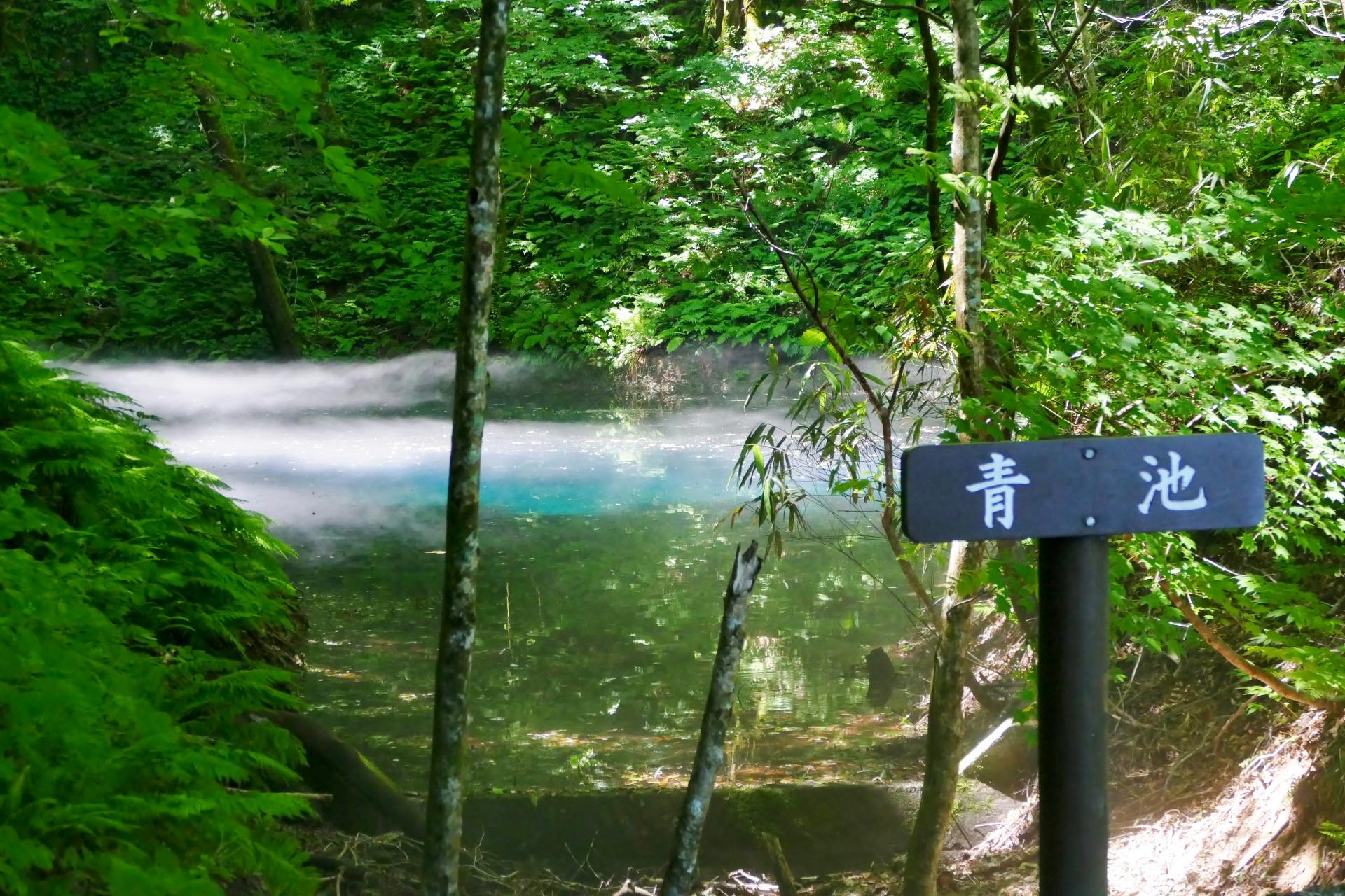 観光 白神 山地 共生の森・世界自然遺産白神山地|青森県観光情報サイト